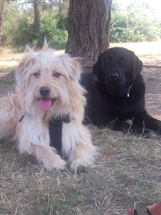 Dash et Violette