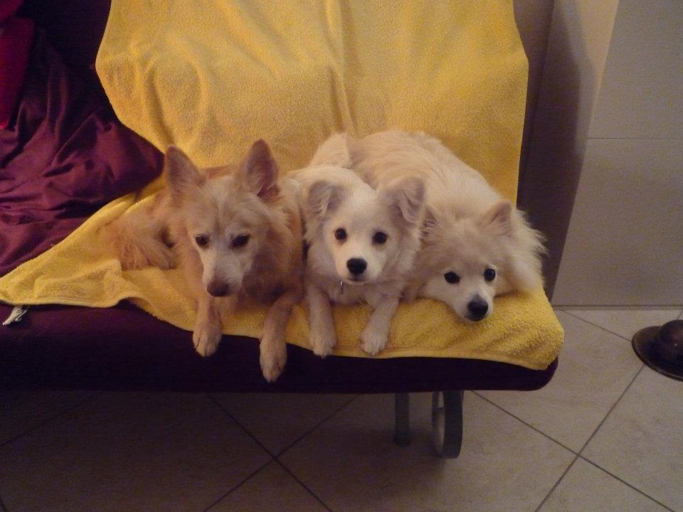 Remi, Tosca et ralf