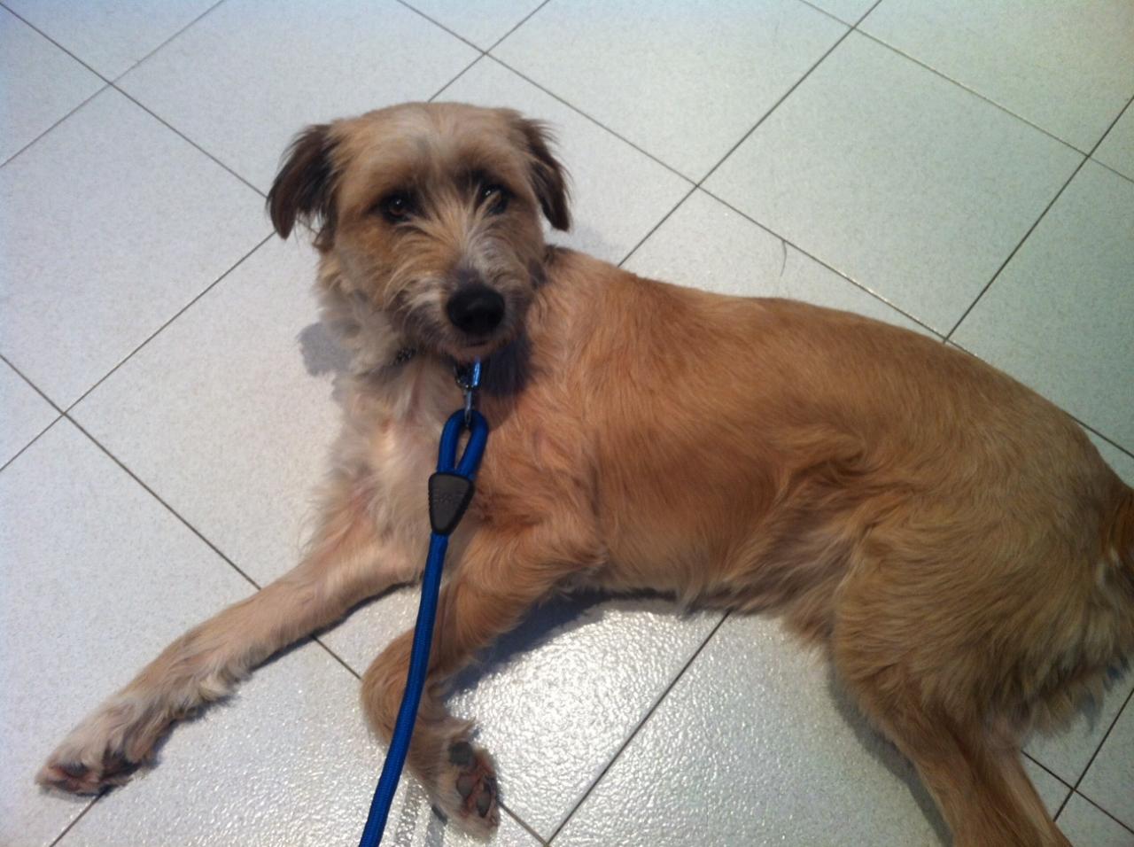 Tzek qui attend PATIEMMENT le véto malgré les autres chiens présents