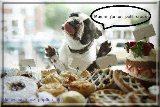 aliments / nourriture interdite chien