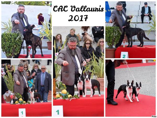CAC Vallauris Golfe Juan boston terrier berger hollandais