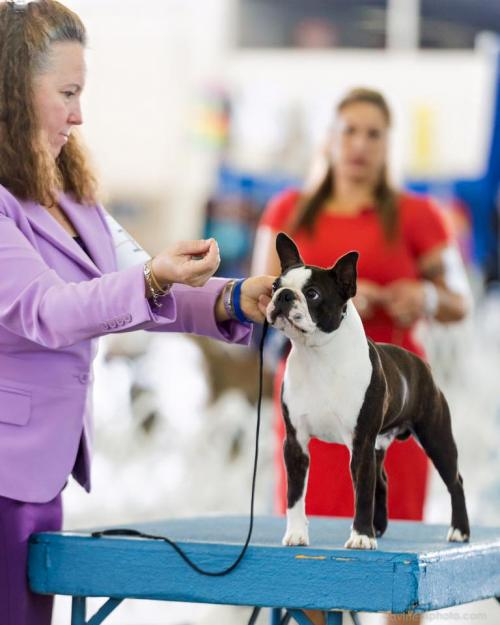 Expositions canines PACA 2017