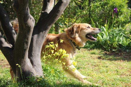 Activités canines 06